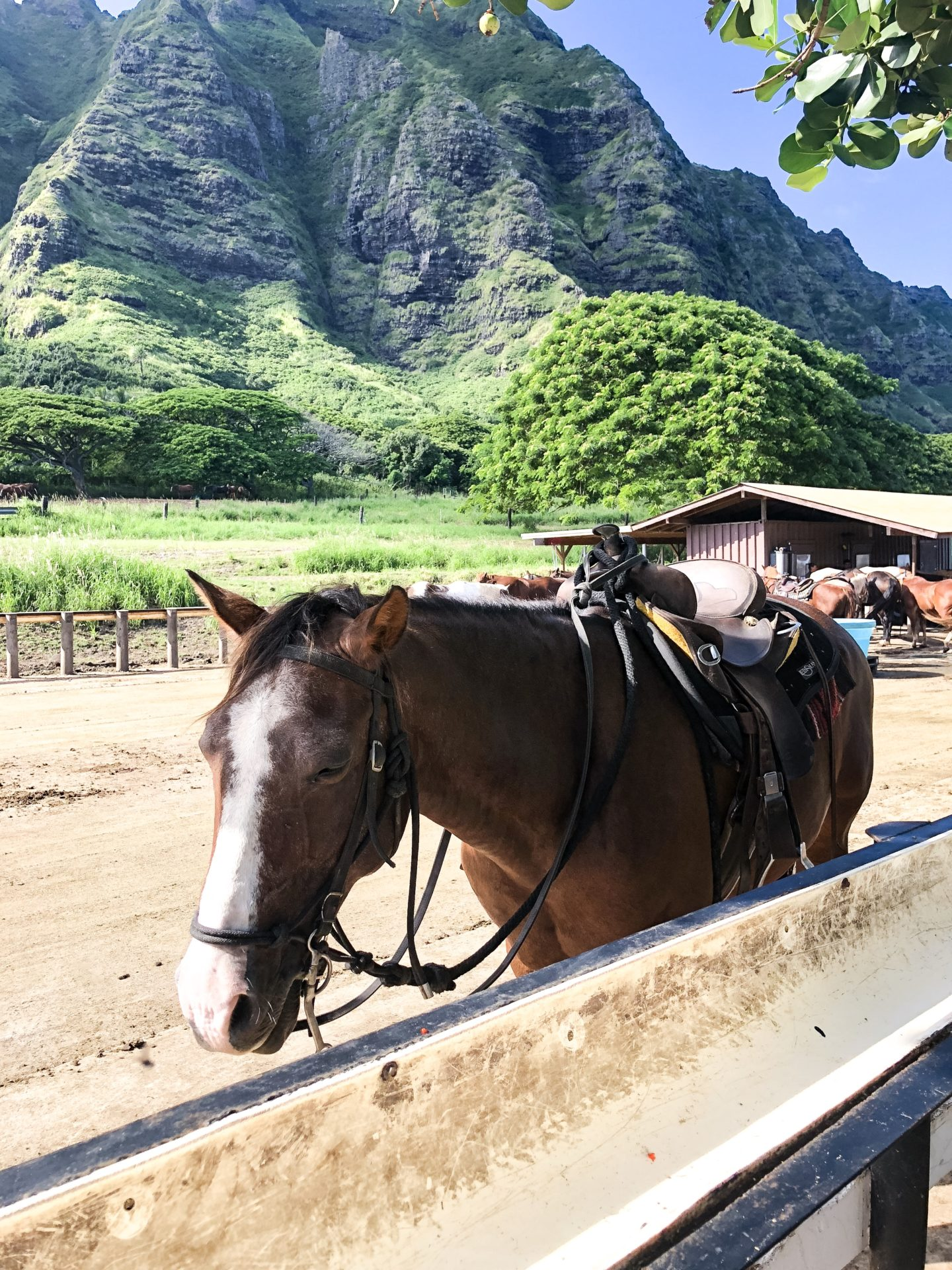 Fifteen Minutes to Flawless Kualoa Ranch Review